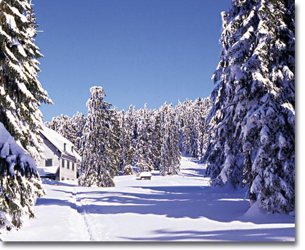 winterrachel